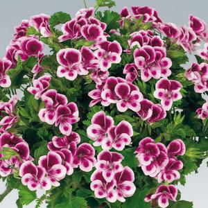 Plantas de temporada jardiflor for Plantas temporada