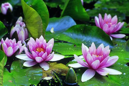 acuático es un mundo maravilloso de vida la variedad de plantas